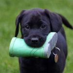 Educazione cinofila dei cuccioli