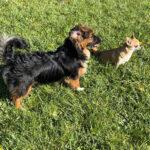 Rasatura estiva del cane e del gatto: una pratica inutile!